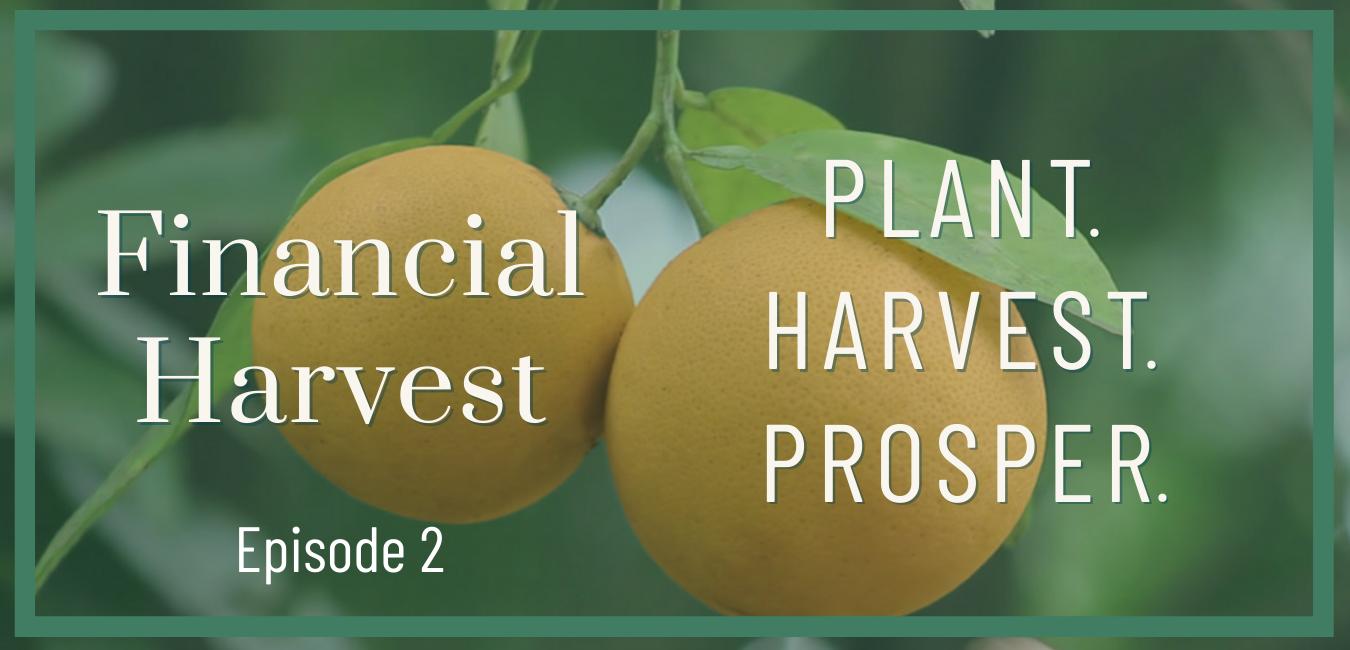 Post-pandemic investing: plant. Harvest. Prosper. Podcast #2